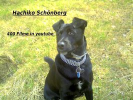 500 Filme in youtube, unter Hachiko Schönberg